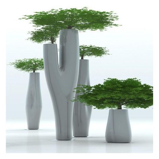 Serralunga Missed Tree II